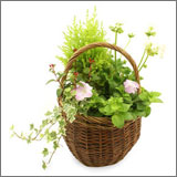 Outdoor Planted Basket