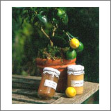 Extra Lemon Tree Gift