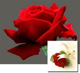 Valentines Deluxe Red Rose